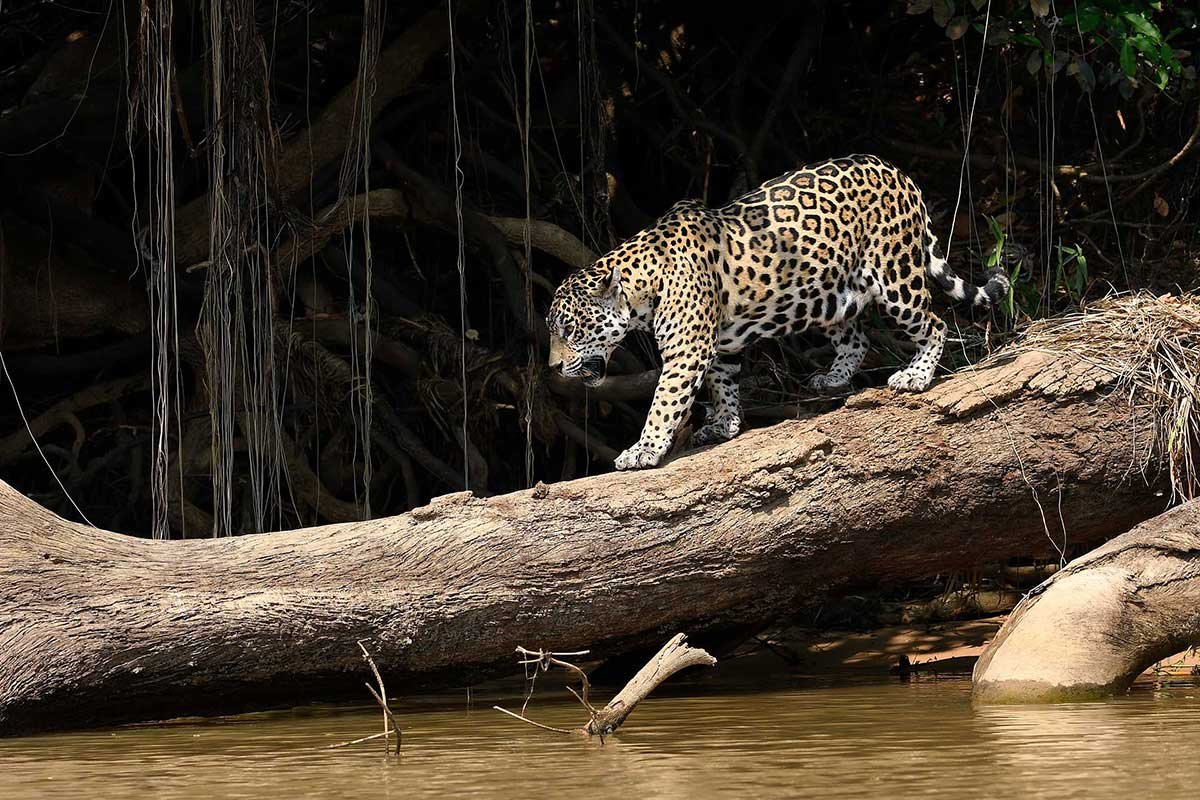 brazil wildlife tours